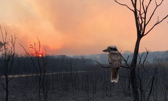 Australian bushfire crisis 2020